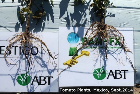 BAM Tomato Roots_tagged